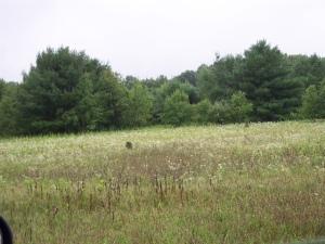 Dougar Field