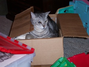 Fergus the cat. His creativity is all boxed up too. See how cranky he looks.