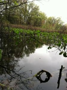 springtime bog